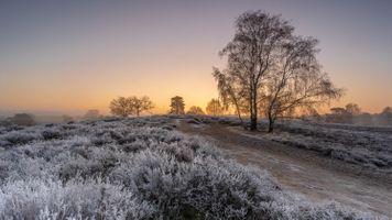 Фото бесплатно поле, закат, иней
