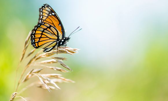 Photo free a blade of grass, butterfly, insect