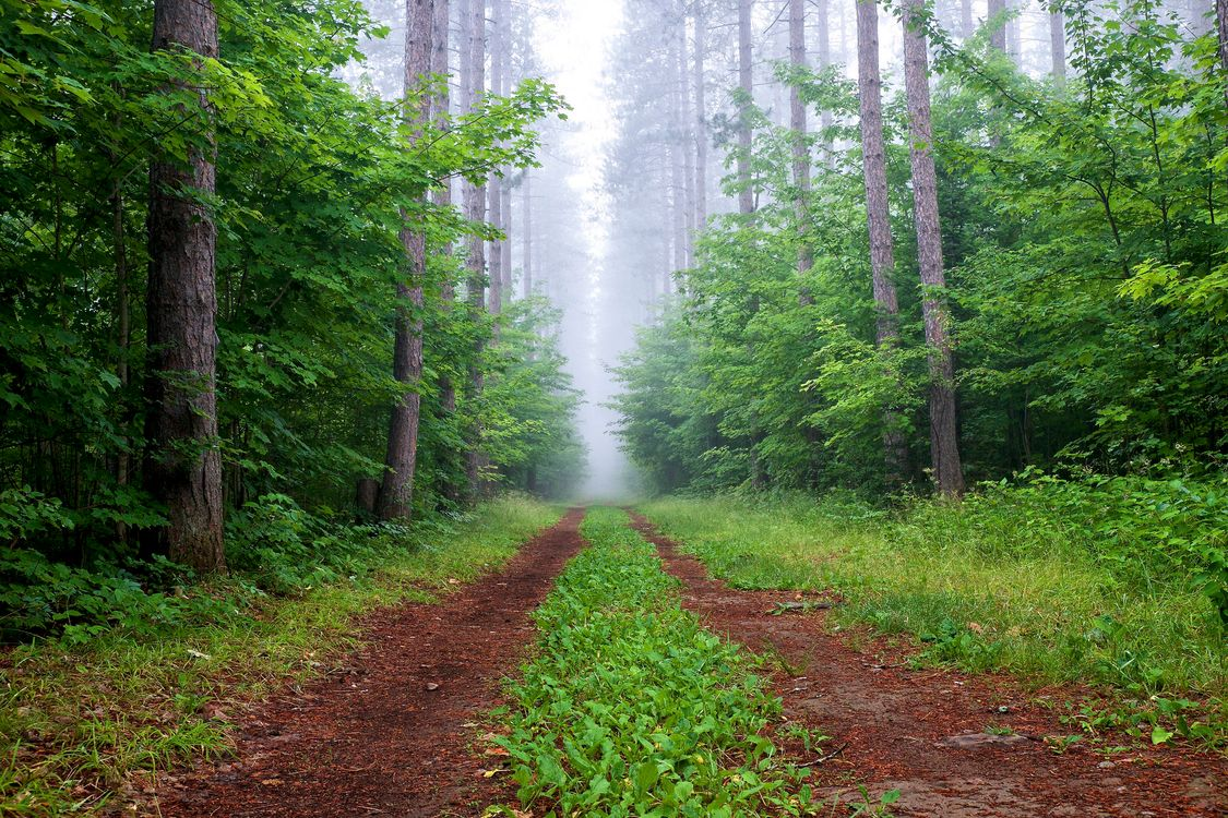 туман в лесу · бесплатное фото