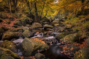 Фото бесплатно осенние краски, река, осень