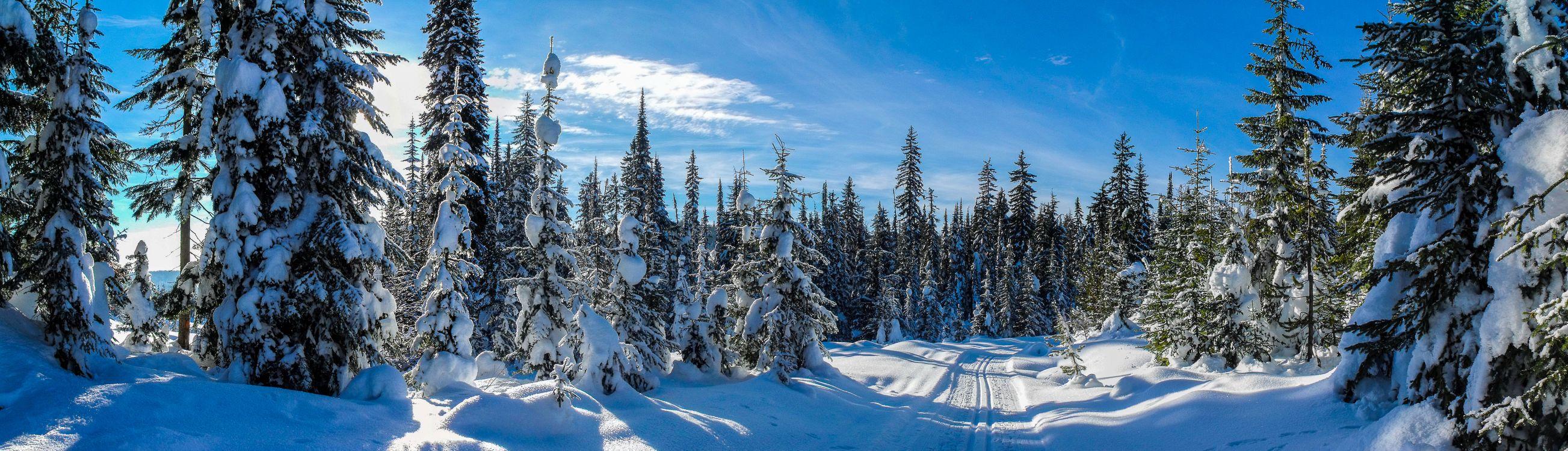 Фото бесплатно зима, снег, лес, деревья, сугробы, дорога, пейзаж, панорама, пейзажи