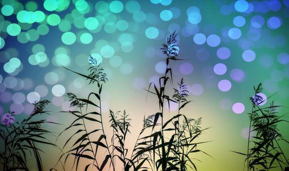 Бесплатные фото тростник,растение,трава,фон,светящийся,природа,art