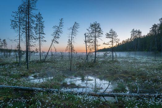 Фото бесплатно закат, Финляндия, болото