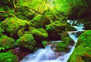 Бесплатные фото водопад,зелёный,лес,камни,речка,деревья,мох
