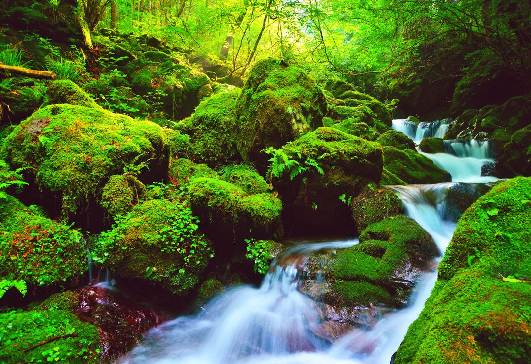 Обои пейзаж, зеленые, деревья картинки на телефон
