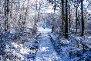 Фото бесплатно снег, природа, дорога
