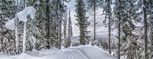 Фото бесплатно лес, панорама, снег
