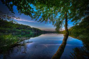 Фото бесплатно лес, отражение, закат