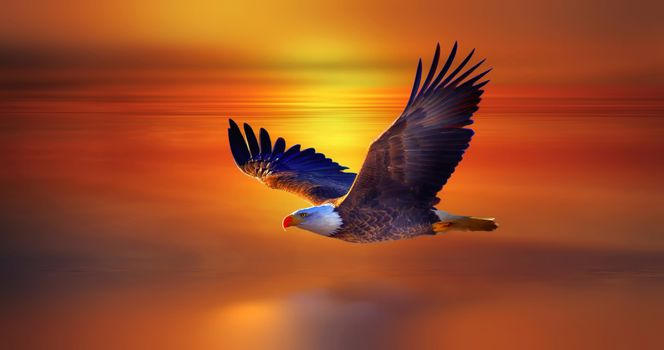 Photo free flying, eagle, bird