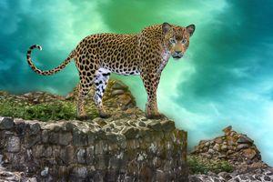 Бесплатные фото леопард,хищник,животное,большая кошка,взгляд,фотошоп,art
