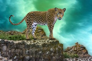 Заставки леопард, хищник, животное