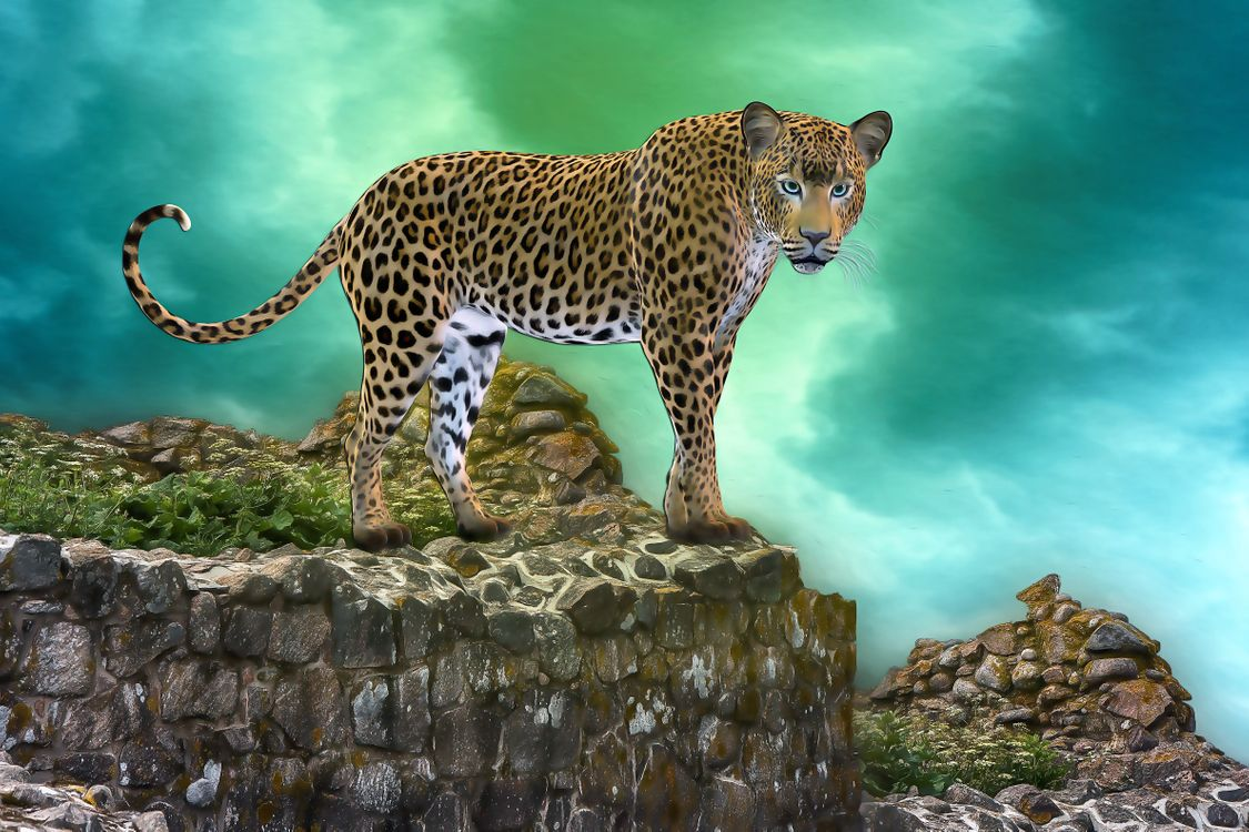 Фото бесплатно леопард, хищник, животное, большая кошка, взгляд, фотошоп, art, рендеринг