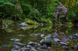 Фото бесплатно лес, деревья, река, камни, цветы, природа, пейзаж