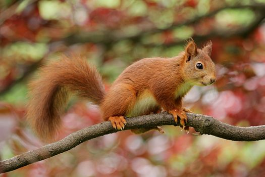 Photo free squirrel, branch, animal portrait