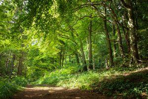 Бесплатные фото лес,деревья,дорога,природа,пейзаж,лето