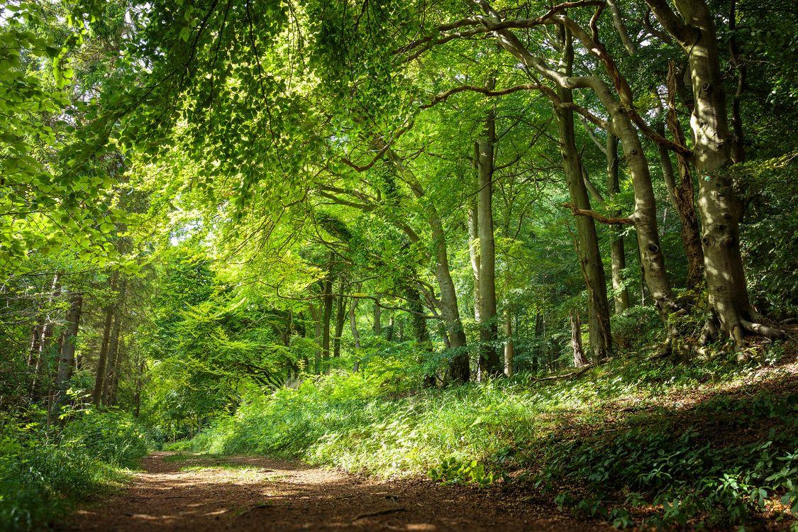 Фото бесплатно лето, пейзаж, дорога - на рабочий стол