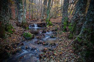 Заставки лес, осень, речка