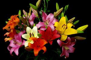 Бесплатные фото лилии,цветы,букет,цветок,цветочный,цветение,цветочная композиция