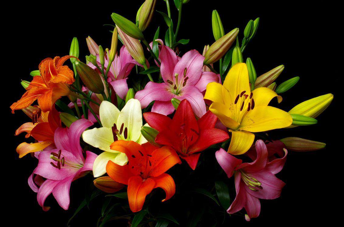 Фото бесплатно цветение, цветочная, черный фон - на рабочий стол
