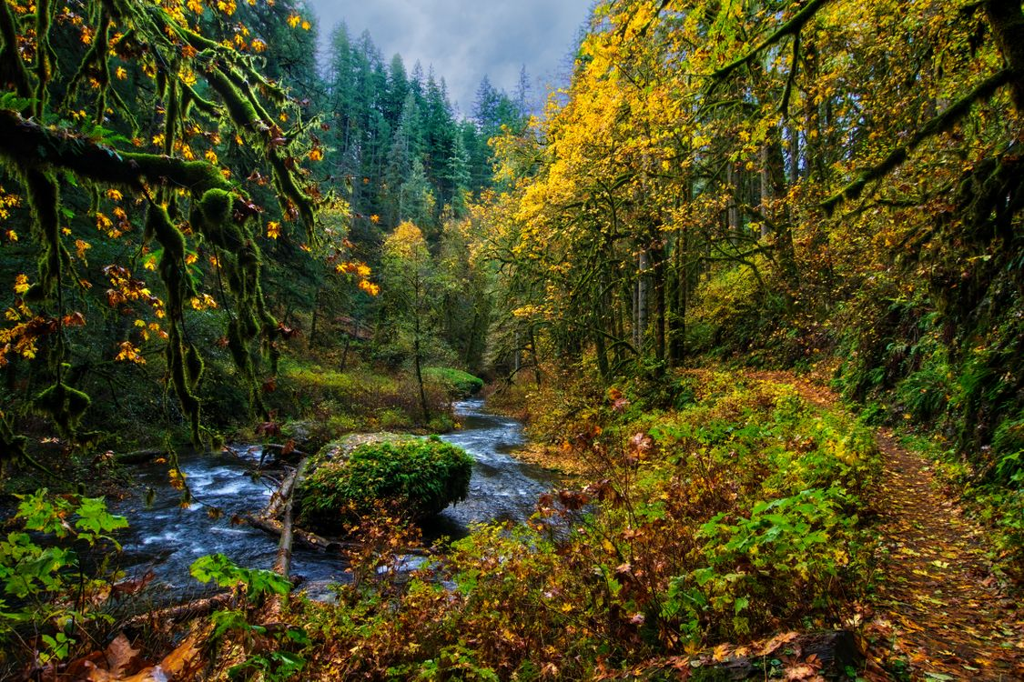 Фото бесплатно осень, лес, деревья, речка, тропинка, природа, пейзаж, осенние краски, пейзажи