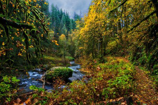 Бесплатные фото осень,лес,деревья,речка,тропинка,природа,пейзаж,осенние краски