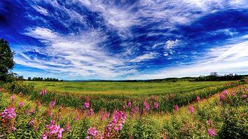 Фото бесплатно поле, небо, облака, цветы, трава, природа, пейзаж