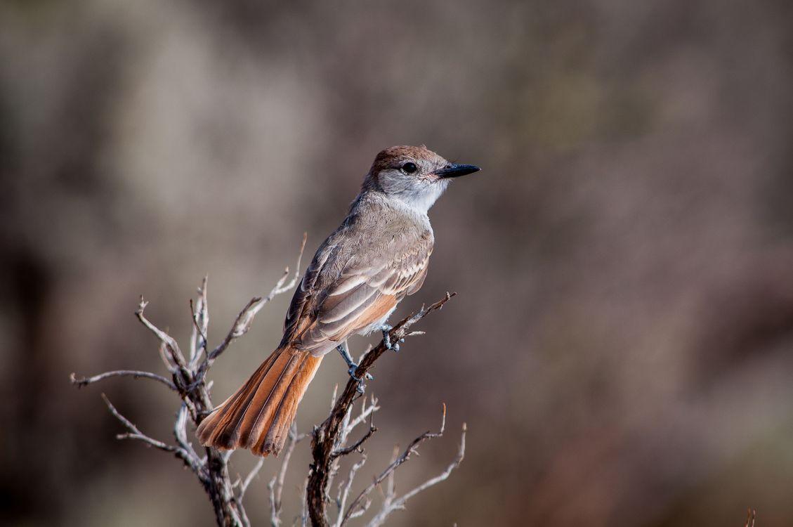 Фото бесплатно птица, крыло, дикая природа - на рабочий стол