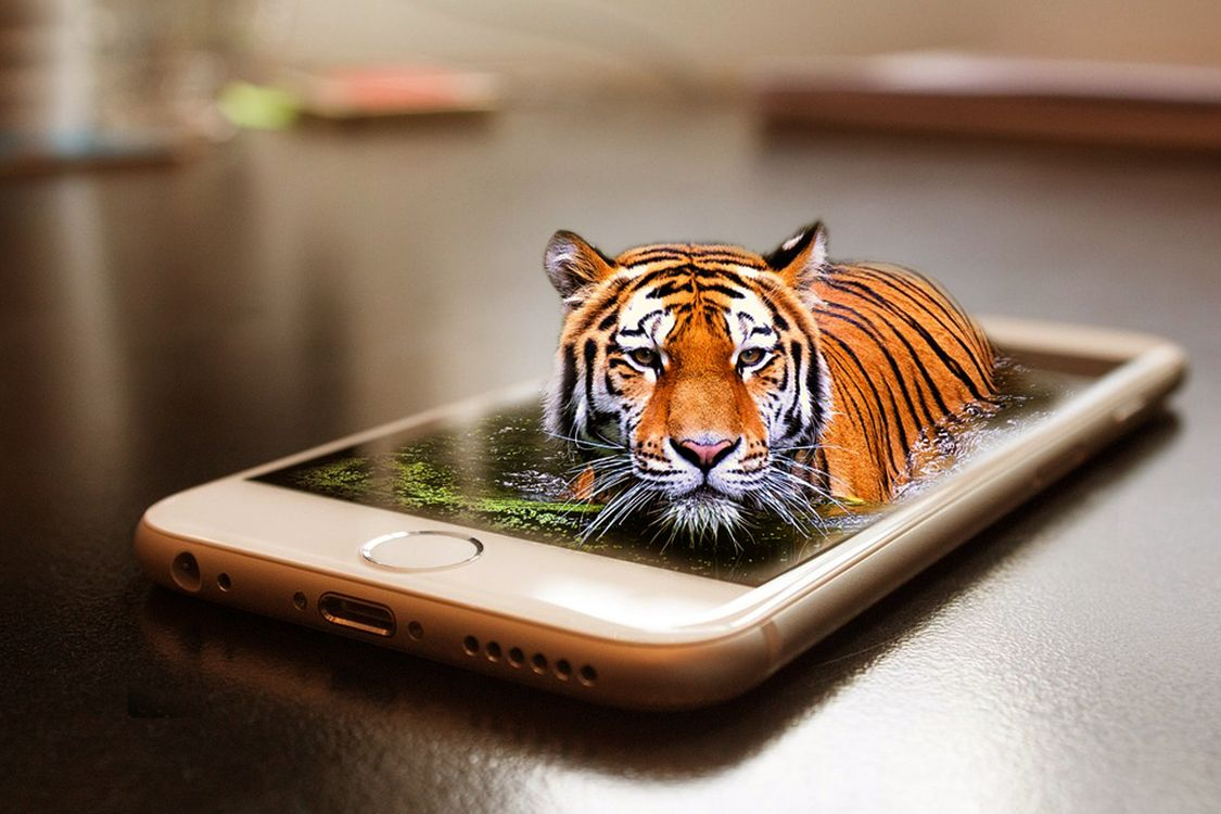 Фото бесплатно смартфон, тигр, кошка, хищник, животные, опасный, природа, млекопитающее, кошачий, живая природа, дикая кошка, цифровой манипуляции, фото искусство, фотошоп, рендеринг