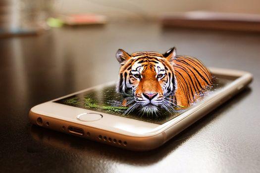 Бесплатные фото смартфон,тигр,кошка,хищник,животные,опасный,природа,млекопитающее,кошачий,живая природа,дикая кошка,цифровой манипуляции