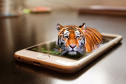 Фото бесплатно смартфон, тигр, кошка