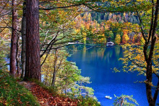 Фото бесплатно осень, лес, домики