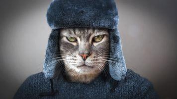 Фото бесплатно кот, кошка, котофей