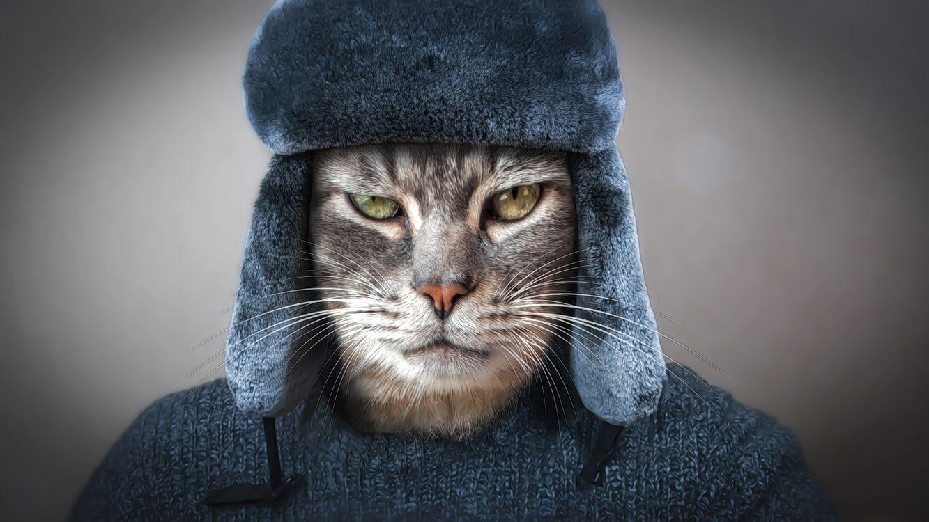 Фото бесплатно кот, кошка, котофей, одежда, шапка, свитер, морда, взгляд, фото на паспорт, art, барсик муркин, кошки