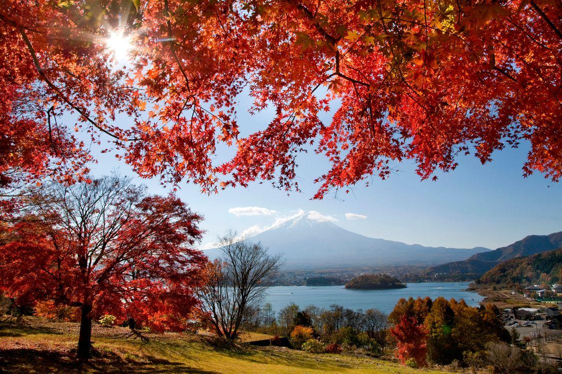 Обои осеннее солнце, осенний день, осень, ветви дерева, красные лепестки, горы, озера картинки на телефон