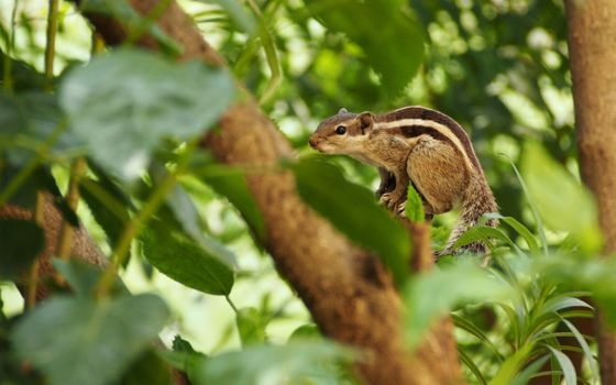 Photo free squirrel, leaves, branch