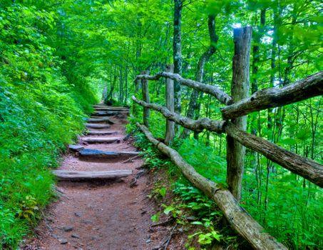 Фото бесплатно природа, лес, ступени