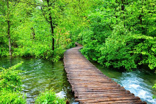 Summer Park in Croatia