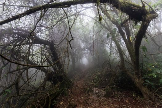 Фото бесплатно тропический, джунгли, деревья
