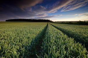 Фото бесплатно закат солнца, поле, колосья