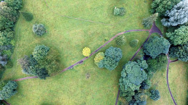 Фото бесплатно дерево, дорожка, трава