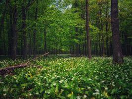 Заставки деревья, цветы, пейзаж