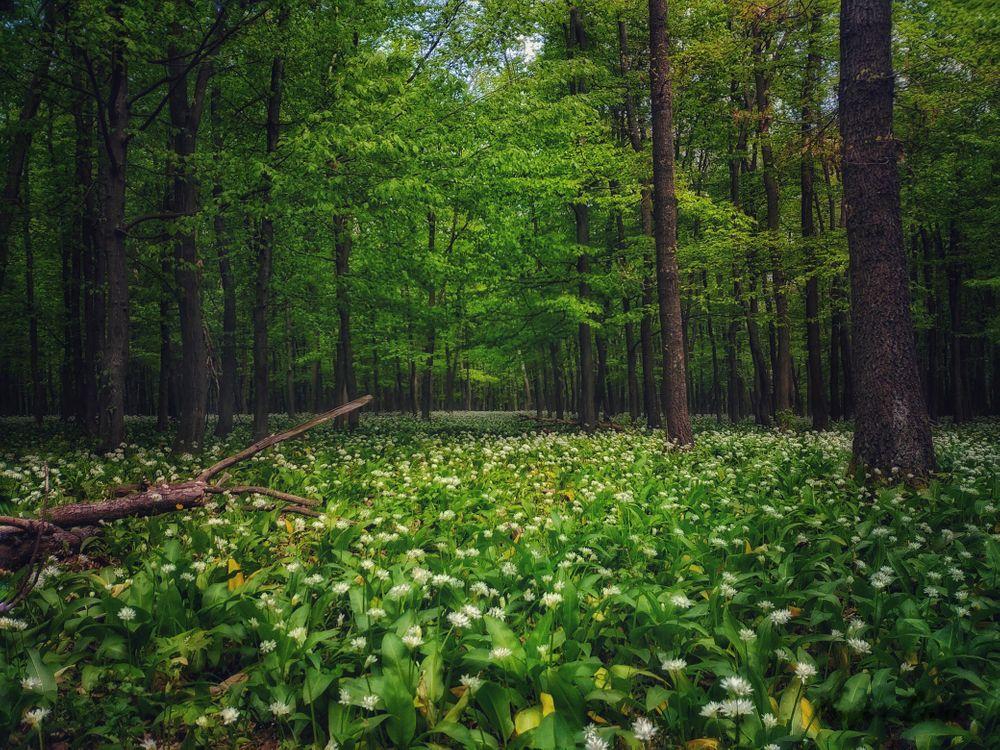 Фото бесплатно деревья, цветы, пейзаж - на рабочий стол