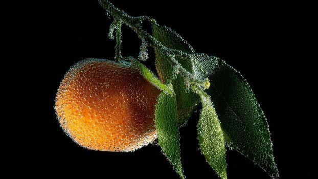Photo free peach, water drops, macro
