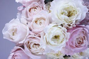Заставки природа, растение, цветок