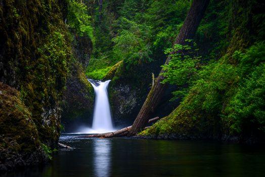 Бесплатные фото Punch Bowl Falls Eagle Creek,Columbia River Gorge,Oregon,водопад,природа,пейзаж