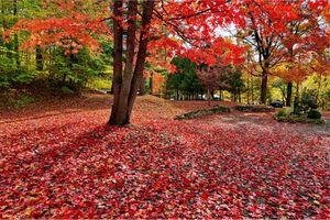 Заставки осенние краски, краски осени, парк, осень, осенние листья, деревья, лес, красная листва