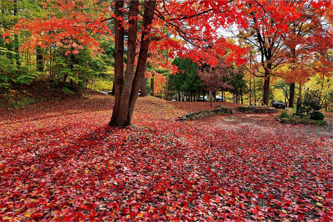 Фото бесплатно осенние цветы, осенние листья, парк - на рабочий стол