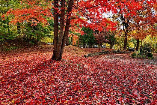 Бесплатные фото осенние краски,краски осени,парк,осень,осенние листья,деревья,лес,красная листва