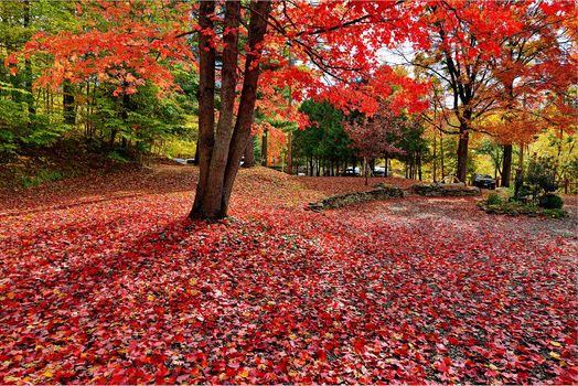 Заставки осенние цветы, осенние листья, парк