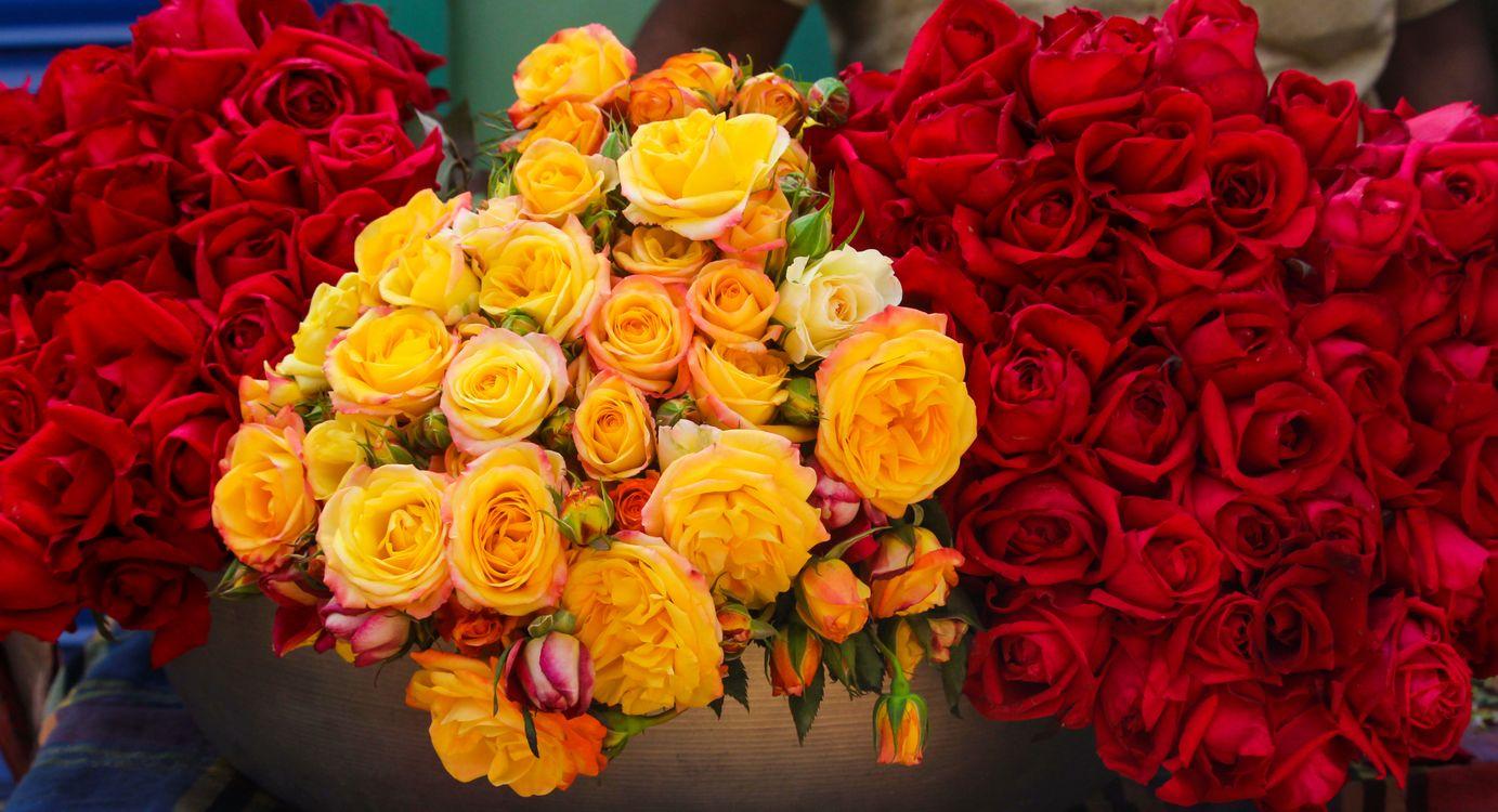 Free photo roses, bouquet, flowers - to desktop